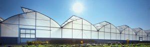 Invernadero Agrofilm